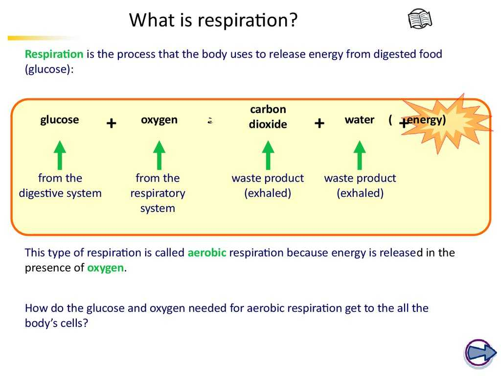 Photosynthesis & Cellular Respiration Worksheet Answers or Ks4 Biology the Breathing System Online Presentation