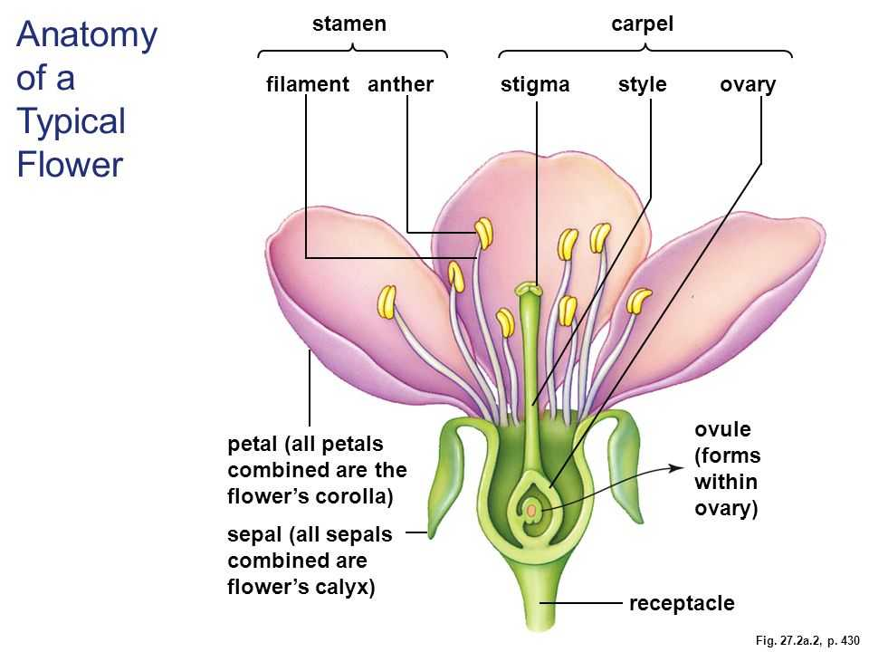 Plant Reproduction Worksheet as Well as Berühmt Anatomy A Flowering Plant Fotos Menschliche Anatomie