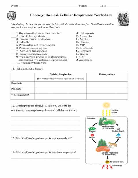 Plate Tectonics Crossword Puzzle Worksheet Answers with Crossword Puzzle Cell Respirationswers Gallery Cellular Worksheet
