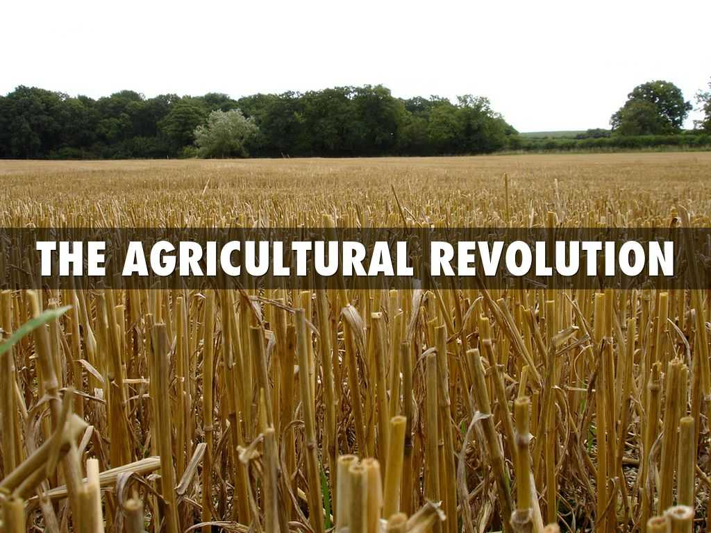 Revolution In Agriculture Worksheet with Early Men by toni Lee