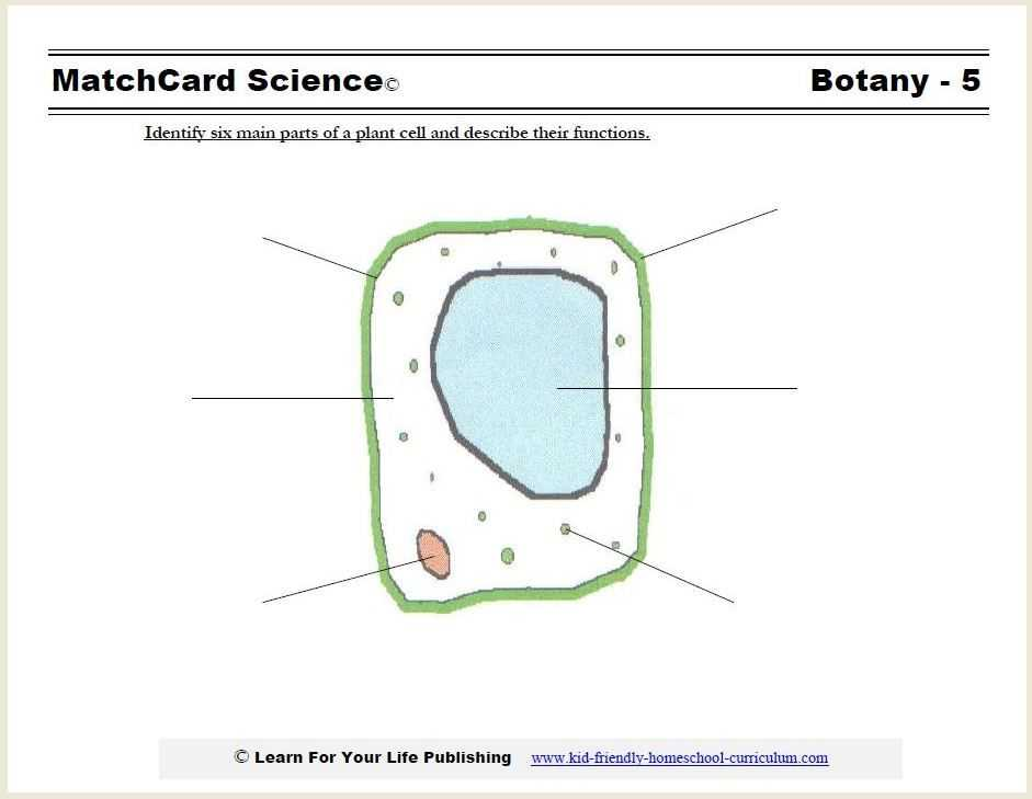 The Animal Cell Worksheet as Well as Plant Cell Diagram