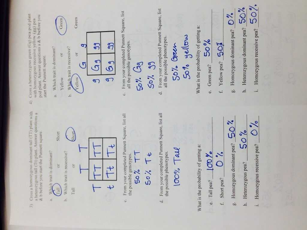The Cell Cycle Worksheet Answer Key And Kindergarten
