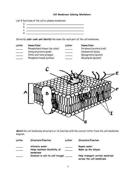 The Role Of Media Worksheet with Cell Membrane Worksheet Google Search