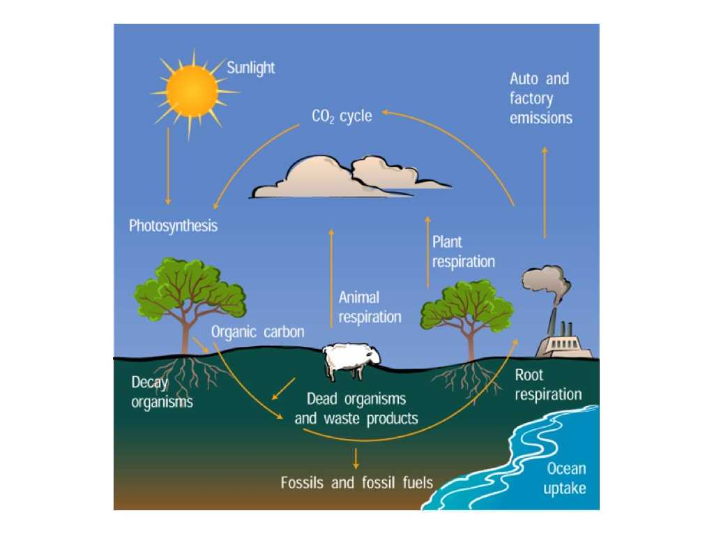 The Water Cycle Worksheet Answer Key with Raptor Science Water Cycle Vs Carbon Cycle