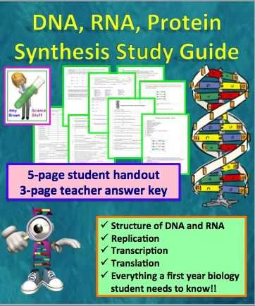 Transcription and Translation Worksheet with Dna Rna Protein Synthesis Worksheet Study Guide