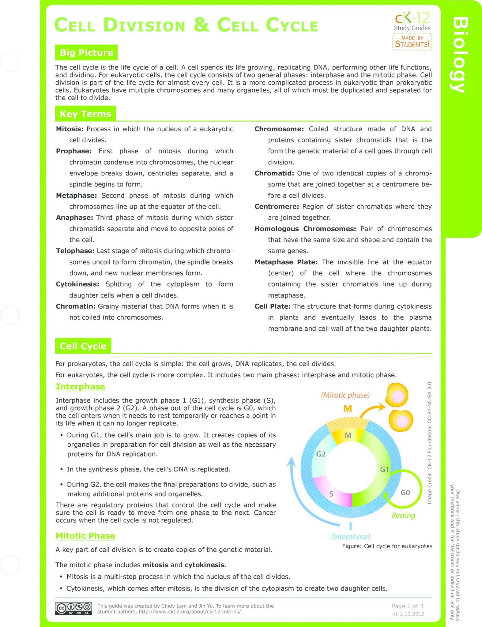 Cell Cycle And Mitosis Worksheet Also 102 Best Biology