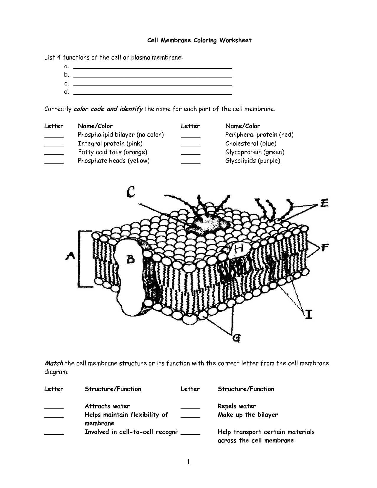 Cellular Structure and Function Worksheet and with Cell Membrane Coloring Worksheet Coloring Pages Answers