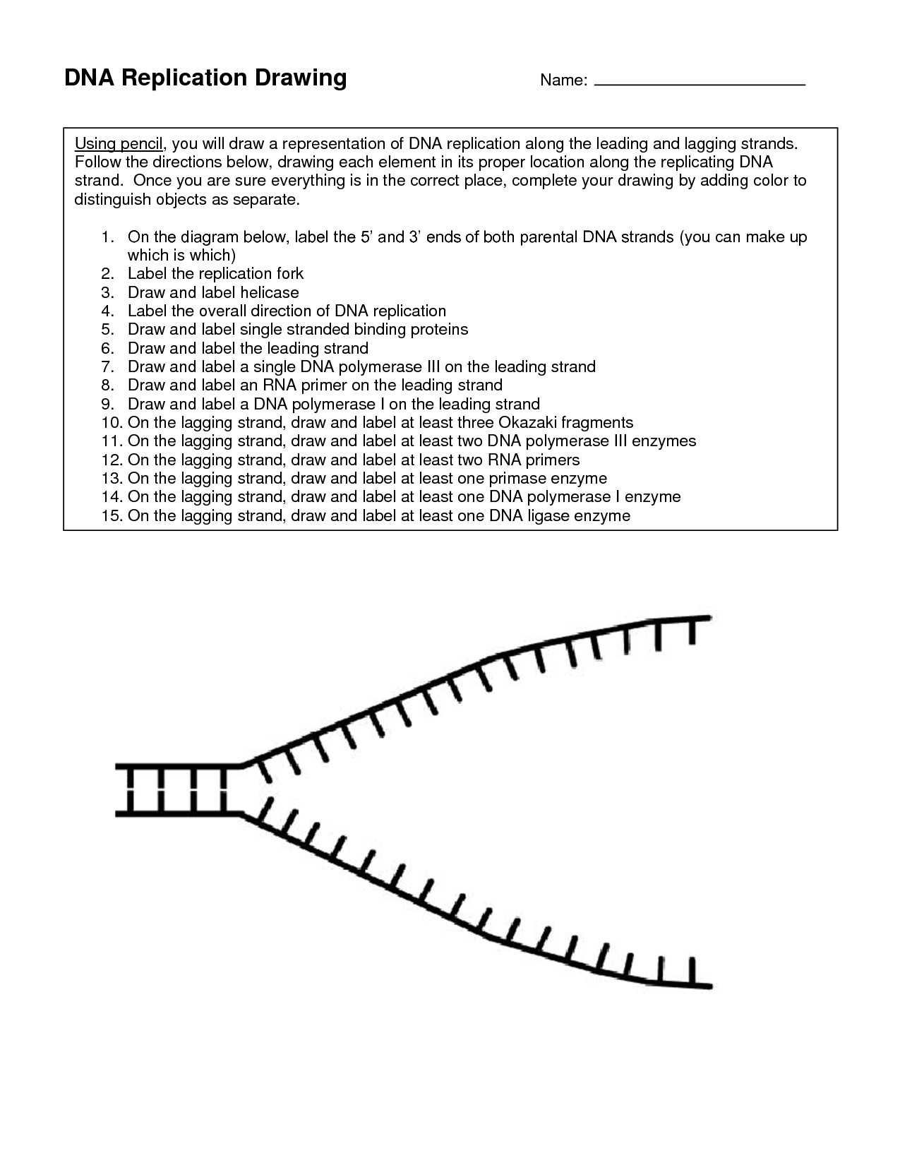 Dna Replication Coloring Worksheet Answer Key Together