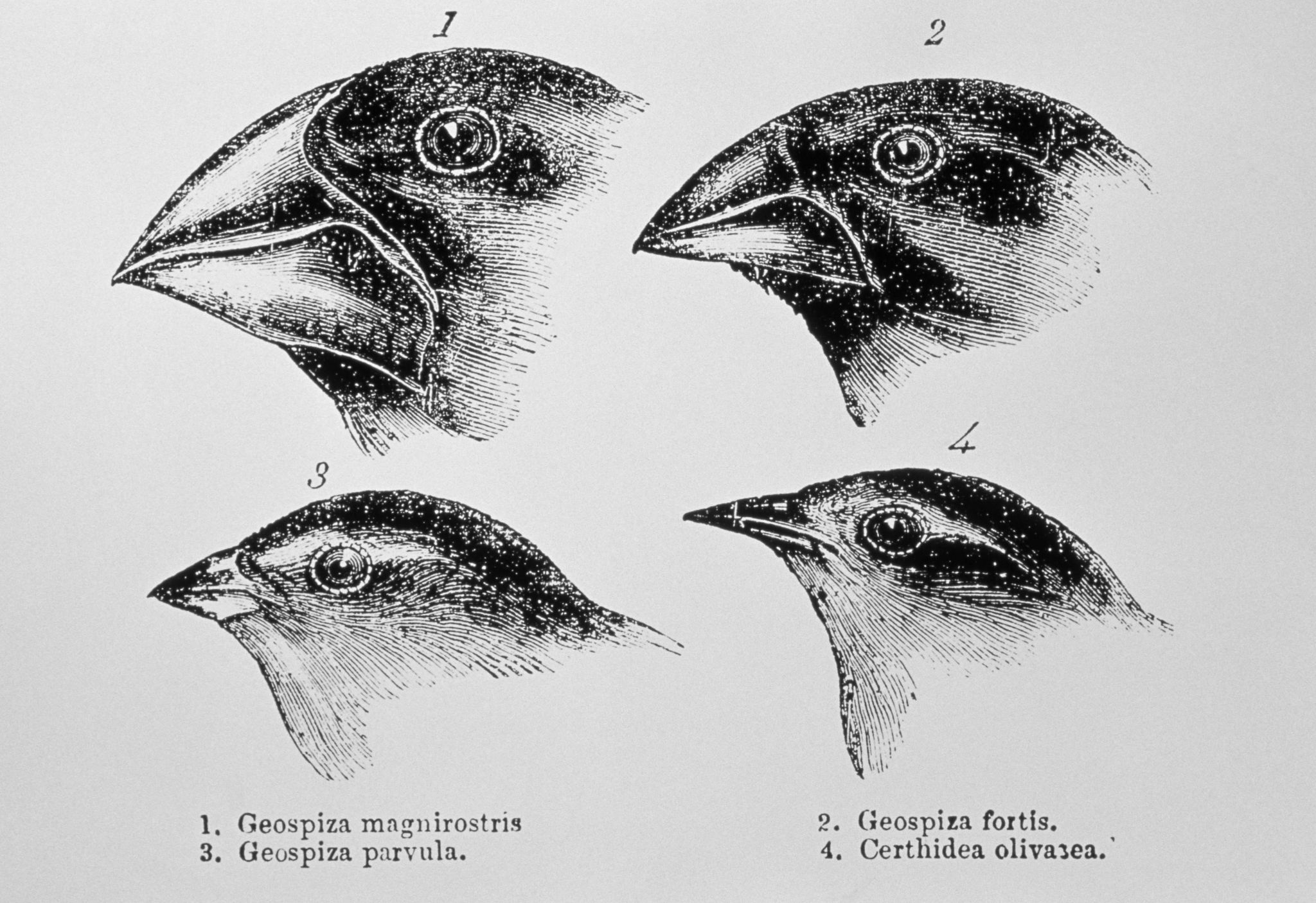 Evolution By Natural Selection Worksheet And Worksheet