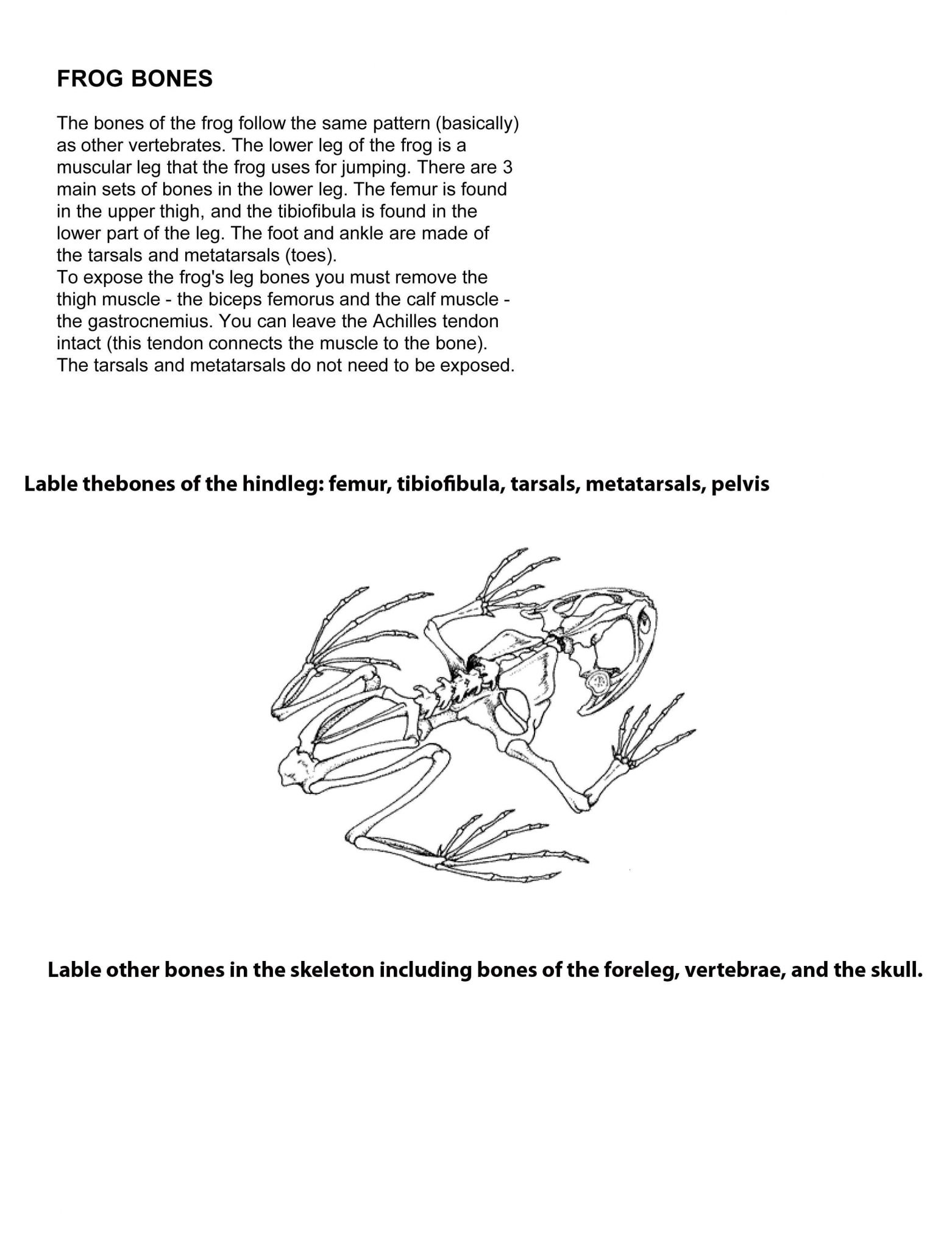 Frog Dissection Lab Worksheet Answer Key Together With