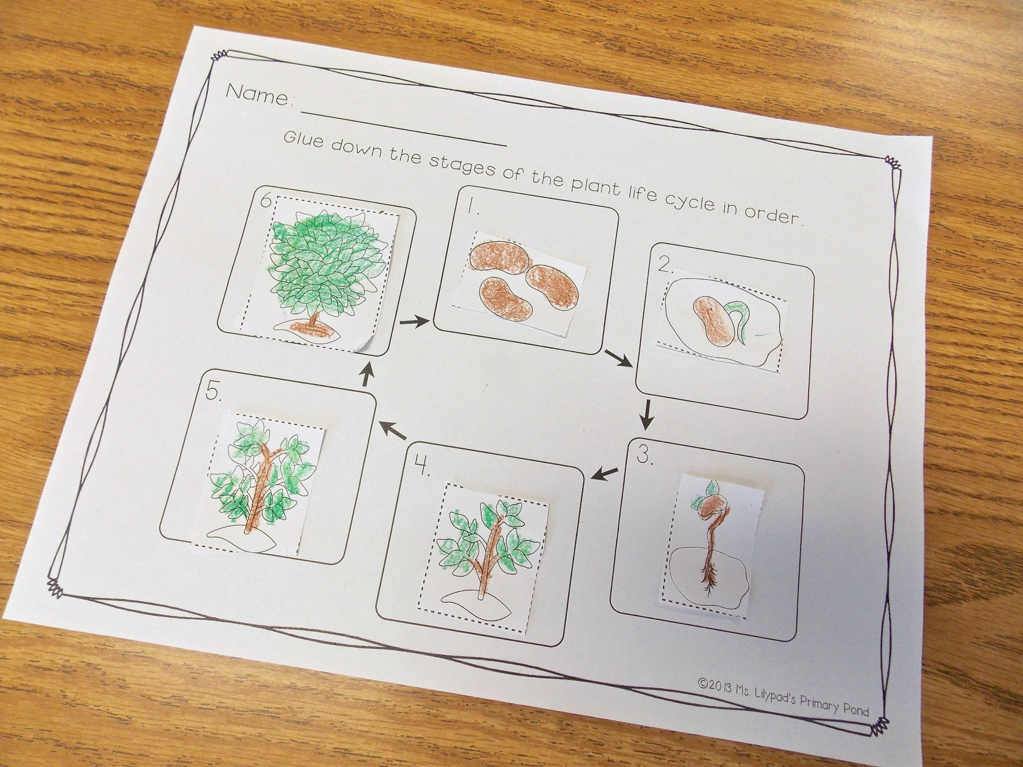 Parts Of A Flower Worksheet or Plant Life Cycle and Parts Of A Plant Unit for Prek Kinder or
