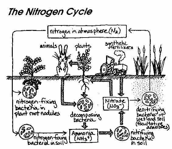 Water Carbon and Nitrogen Cycle Worksheet Color Sheet Answers Also Ib Biology Chemistry Ib Microbes and Biotechnology Option F