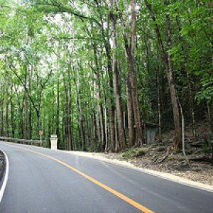 semestafakta-changa-manga-forest3