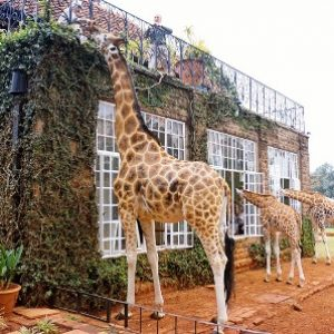 semestafakta-Giraffe Manor2