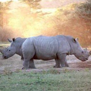 semestafakta-Khama Rhino Sanctuary
