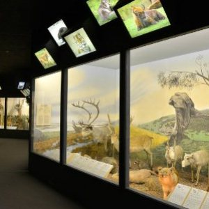 semestafakta-The Latvian Museum of Natural History