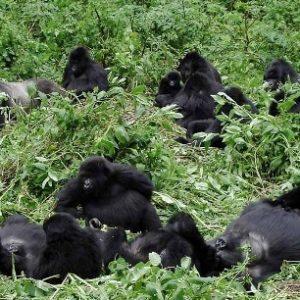 semestafakta-Bwindi and Mgahinga national park3