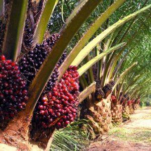 Bahan binaan daripada sisa industri kelapa sawit