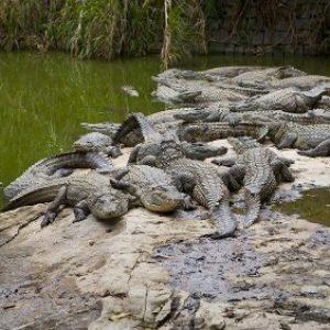 semestafakta-La Vanille Reserve des Mascareignes mauritius2