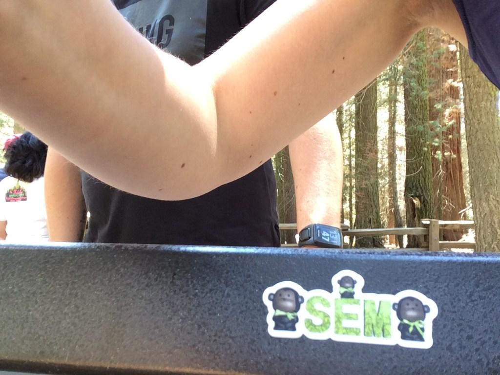 Sequoia (3)