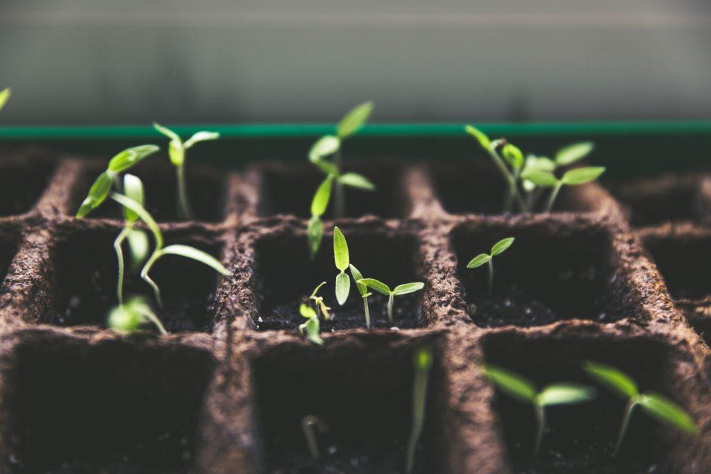 Eco plantation terrarium