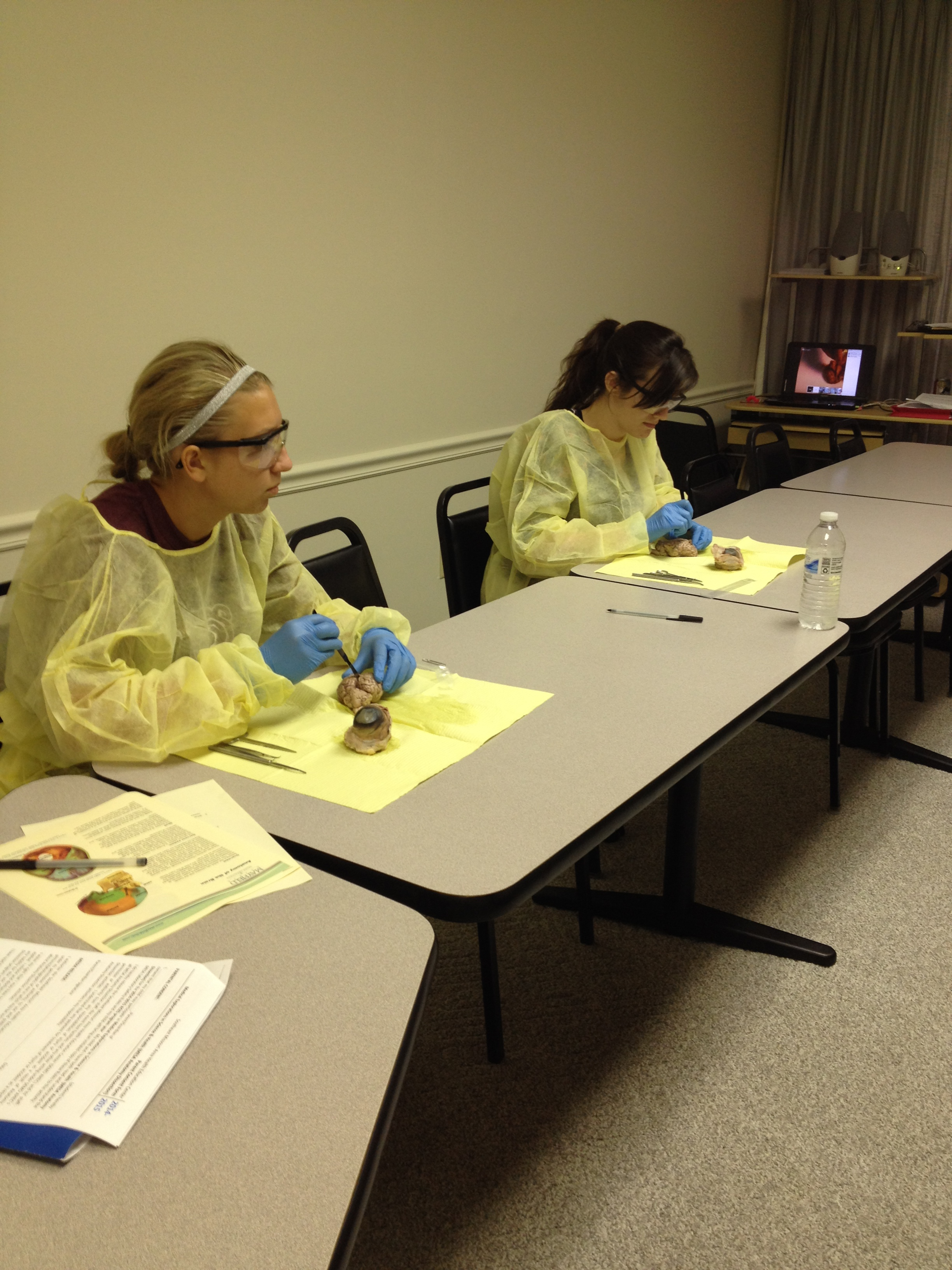 Mesa Why So Sensitive Dissection Lab Semo Ahec