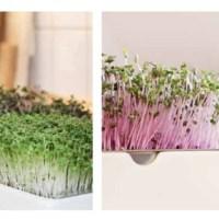 Indoor-Garten für Microgreens von Heimgart im Test