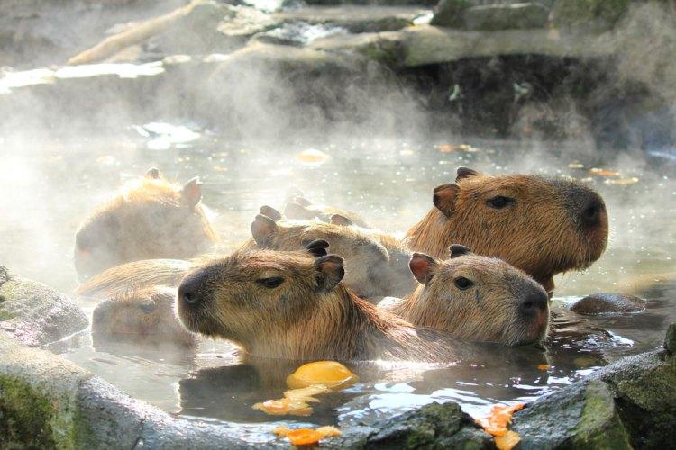 Penisola di Izu: Monte Omuro e Capybara alle terme