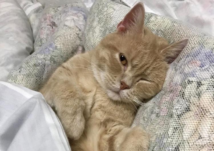 Ryokan giapponese offre il massimo del comfort: un gatto che dorme con te