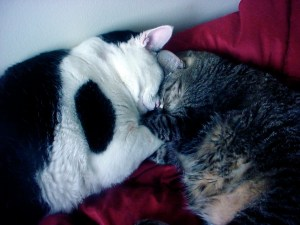 my cats, snug as two love-bugs in a rug...