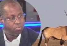 «Abdou Karim Sall va rembourser les 2 gazelles mortes et restituer…»