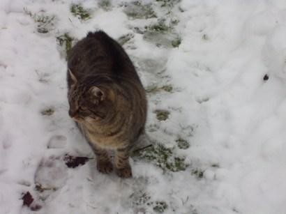 Katze Leticia ist die Mutter von Hoppel und liebt es, das zu fressen, was sie sieht . Sie ist den ganzen Tag unterwegs und kommt nur zu den Futterzeiten. Sie freut sich aber sehr, hier zu leben.