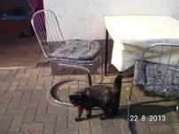 Katze Gerda ist der beste Mäusefänger, aber sehr scheu vor Fremden . Wenn es Fressen gibt, ist sie mit Chester als Erste zur Stelle und die Figur leidet drunter.