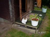 Katze Lavinia liebt ihre Lauben, denn sie wohnte schon in beiden Holzlauben. Sie ist ein kleiner Angsthase und eine der Ältesten.