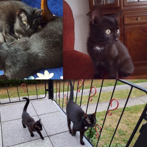 Katzenmama und Katerchen suchen ein liebevolles Zuhause. Beide sind sehr zutraulich und freuen sich auf liebevolle Hände. Kontakt: Frau Böhnisch 03573/81616