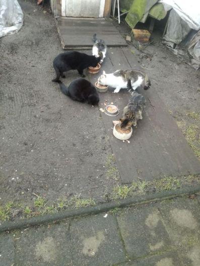Katzenkolonien6