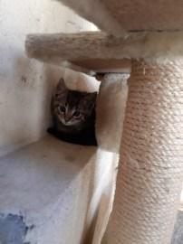Katzenkinder3