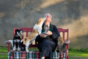 picture of man on bench with two dogs and a cat