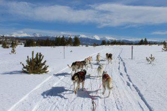 Dogsledding at Snow Mountain Ranch