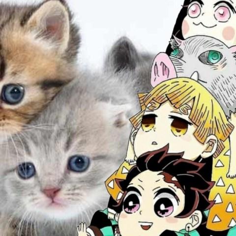 Cosplay de Kimetsu no Yaiba con gatitos