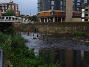 May River Don