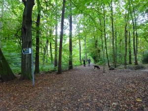 Oct Autumn in Ecclesall woods