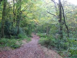 Jan Walking-Woodland-Picture