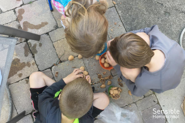 Three homeschool kids playing with walnuts in bowls