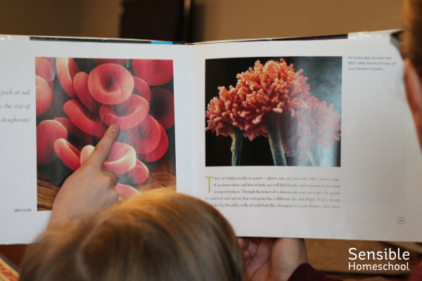 Kids looking at homeschool science picture book (Hidden Worlds by Stephen Kramer)