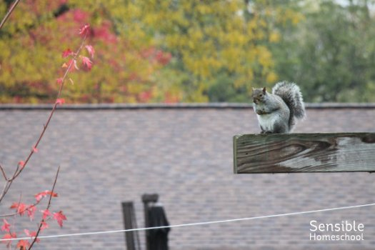 Squirrel perched on backyard swingset.