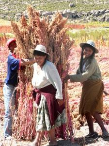 quinoa-farmer-bolivia-Productrices-récolte-de-quinoa-rouge-préparation-au-1-001