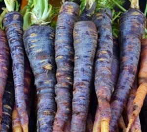 carote-viola