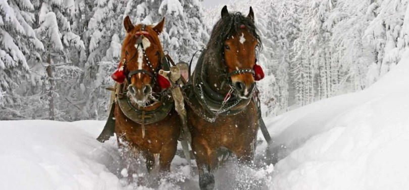 slitta-cavalli-inverno-escursione-03