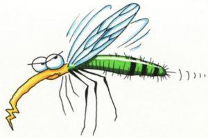zanzare-2